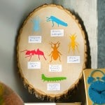 Kids craft - insect ID chart