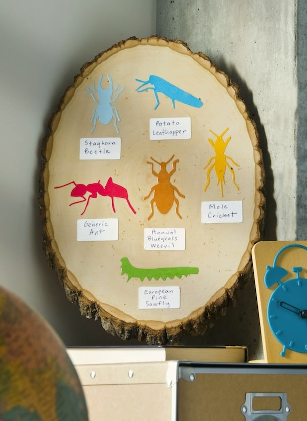This insect ID chart is such an easy kids craft. It allows you to take the opportunity, with your children, to learn about the bugs in your environment!