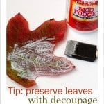 How to preserve fall leaves with Mod Podge