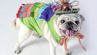 Halloween Goes to the Dogs: Sparkly Piñata Costume