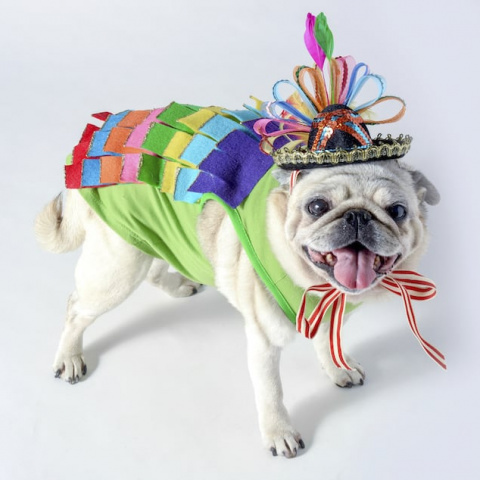 Dog Piñata Costume