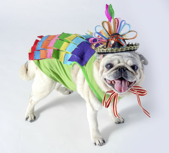 Sparkly piñata costume for a dog