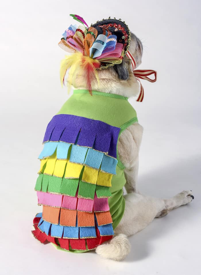 This piñata dog Halloween costume was so easy to create! I used simple supplies including rainbow felt with a doggy tee I already had. SO cute!