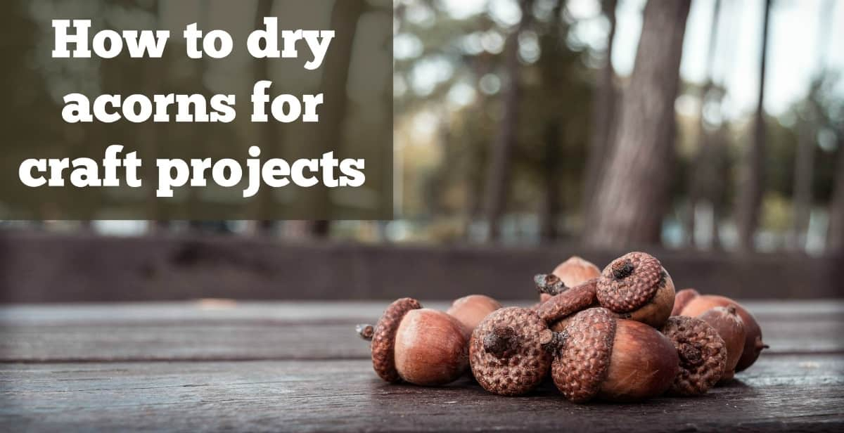 How to dry acorns for craft projects