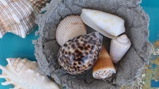 Beach Sand Trinket Dish